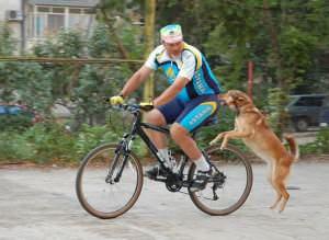 собака бежит за велосипедом