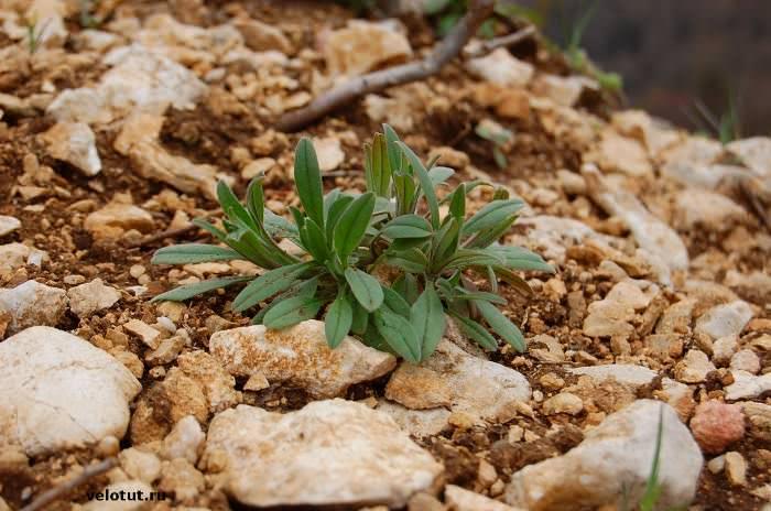 растение в горах