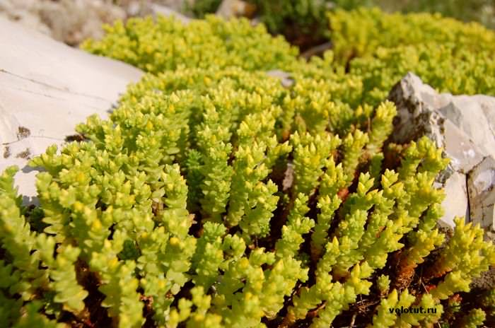 зеленое растение в горах