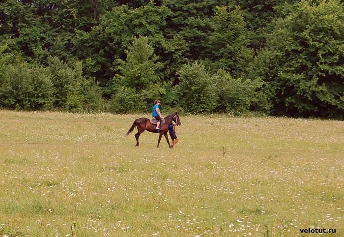 конь везет всадника