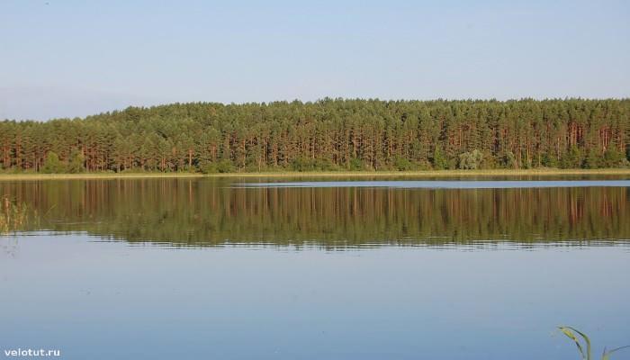 озеро селигер и сосны