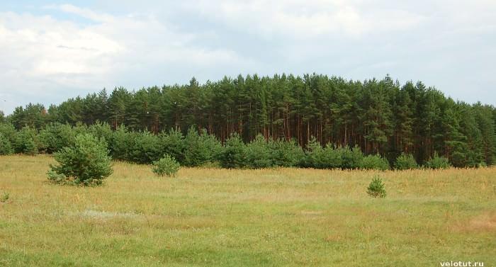 зеленый лес на селигере