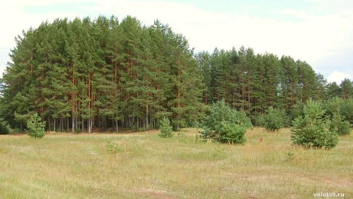 лес селигер