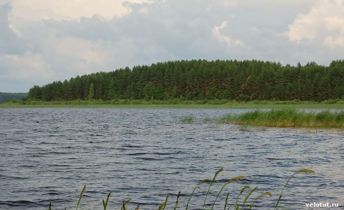 озеро с камышами