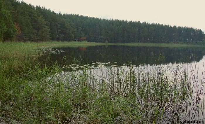 камыши на озере селигер