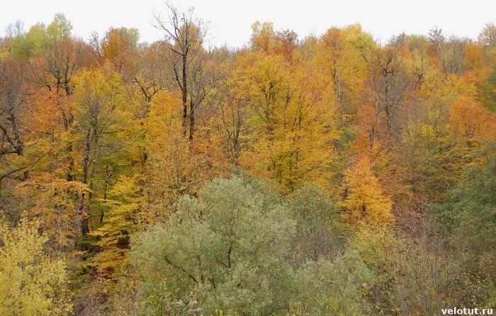 разноцветный лес в ноябре