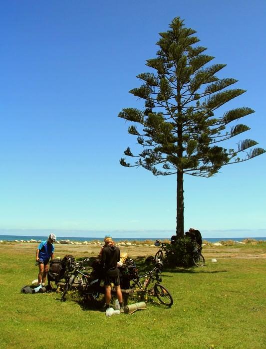 на берегу Тасманова моря, Новая Зеландия