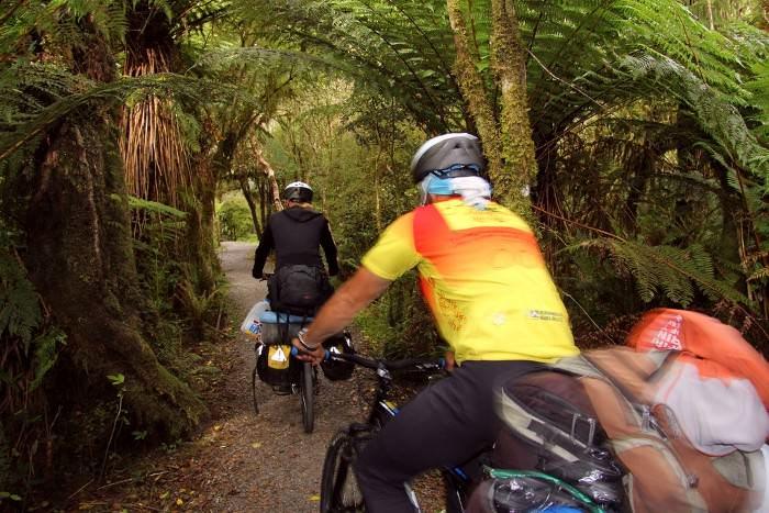 велосипедисты новозеландские джунгли