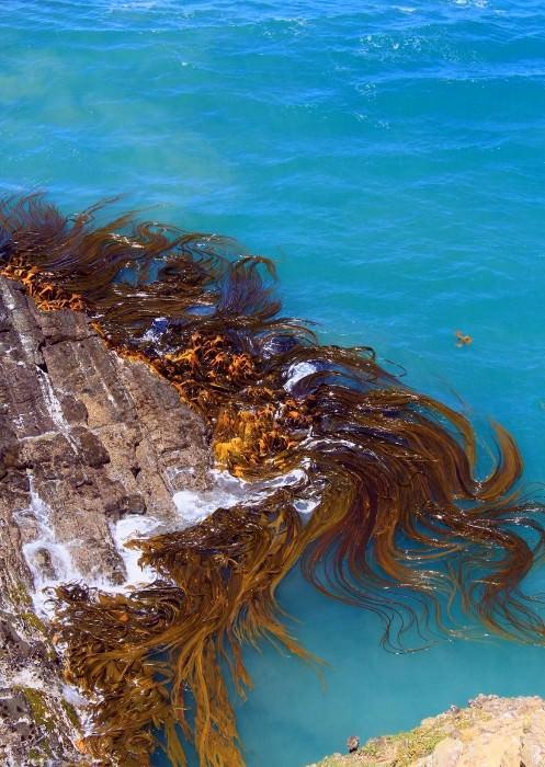 растение в тихом океане