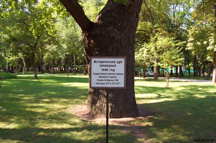исторический дуб краснодара