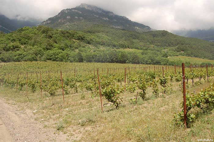 виноградники ялта