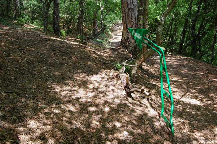 зеленая стрелка в заповеднике