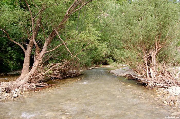 деревья наклонились к реке