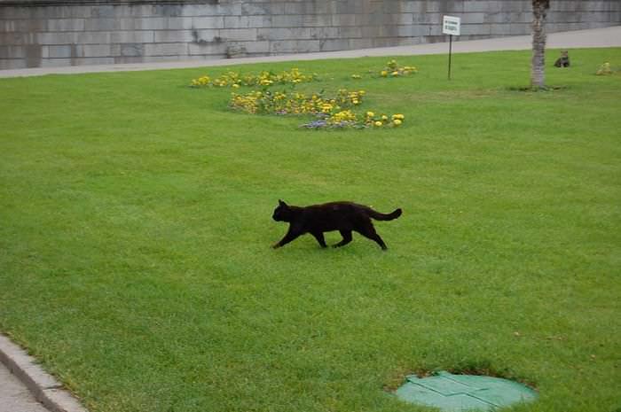 котик в ливадии