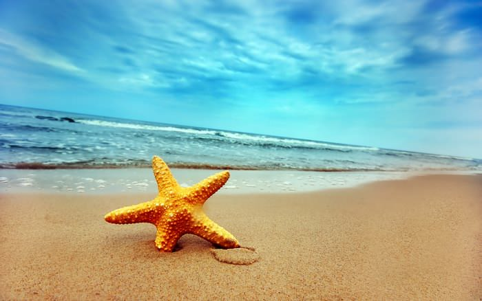 звезда на море