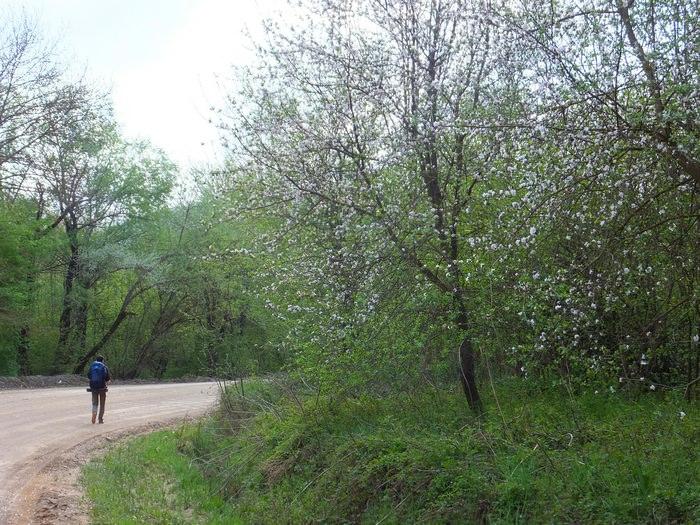 дорога на планческие скалы