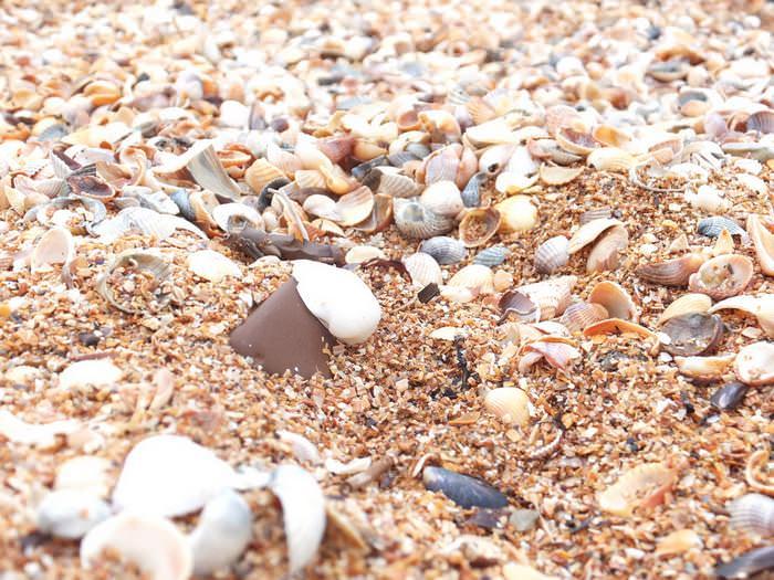 ракушечный пляж