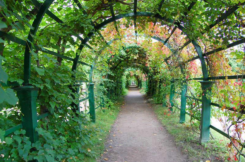 арка из зелени