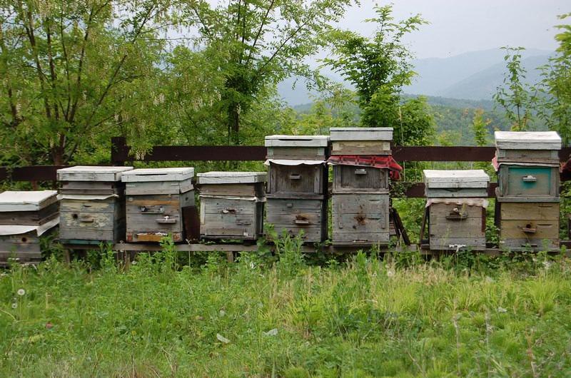 пчелиные улья