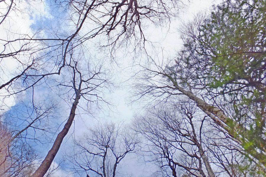 деревья в небе