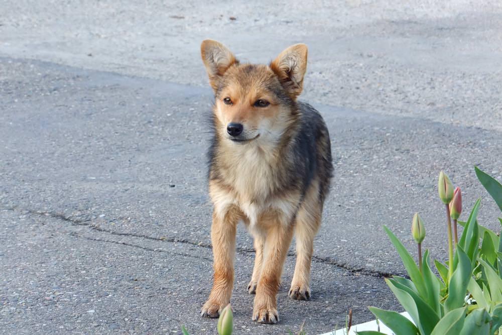 собака из белореченска