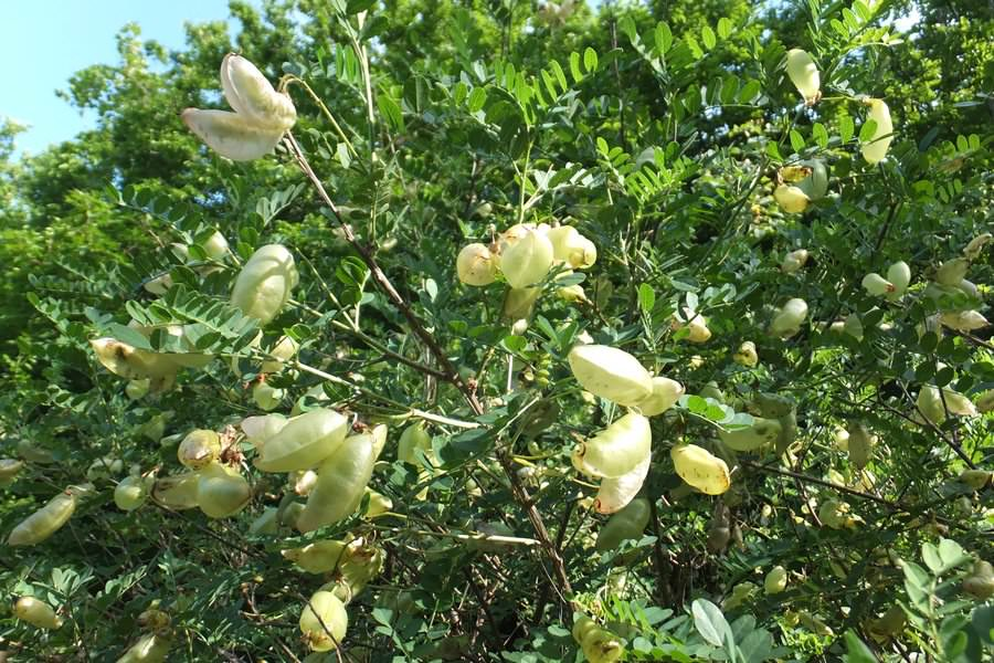 растения на маркотхском хребте
